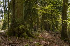 Am Wieh-13520 (extrapeter) Tags: bergen niedersachsen deutschland