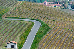 Vineyards of Oltrepo Pavese in April (clodio61) Tags: april europe italy lombardy oltrepopavese pavia agriculture color country day field green hill land landscape nature outdoor photography plant road rural scenic spring springtime sunny village vine vineyard