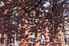Peeping through the leaves! (alisonhalliday) Tags: tmt trees foliage newcastleupontyne canon eos 77d canonefs18135mm