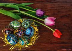 Easter Eggs (hey its k) Tags: 2019 canon5dmarkiv easter flowers ukrainianeggs hamilton ontario canada imga2570e tulips eggs