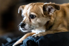 joanszoo20Apr20190004 (fredstrobel) Tags: animals atlanta bella dogs ga mytownhouse places pets usa