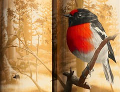 Male Red-capped Robin, Wirrabara Silo Art, South Australia (Red Nomad OZ) Tags: wirrabara southaustralia australia silo siloart art painting outdoor southernflindersranges midnorth flindersranges country rural countryside
