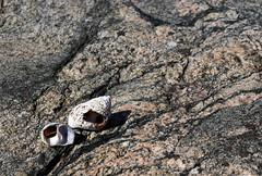 shells (helena.e) Tags: helenae fotö husbil rv motorhome snäcka shell