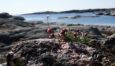 fotö (helena.e) Tags: helenae fotö husbil rv motorhome flower blomm water vatten hav ocean