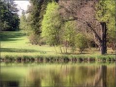 (Tölgyesi Kata) Tags: withcanonpowershota620 botanicalgarden vácrátót botanikuskert vácrátótibotanikuskert nemzetibotanikuskert tree spring tavasz water lake