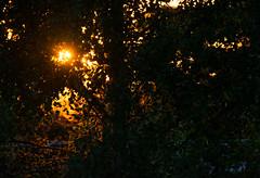 Sunset trough the leaves. (Azariel01) Tags: 2019 belgique belgium brussels bruxelles coucherdesoleil sunset leaves feuilles trees arbres rayons rays sunbeam