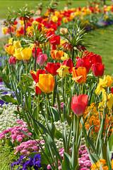 Frohe Ostern 2019 (KaAuenwasser) Tags: froheostern ostern feiertag blüten blumen frühling april 2019 tag bunt farben sonne licht stimmung pracht pflanzen tulpen botanischergarten karlsruhe