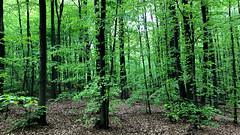 May greenery (piotr_szymanek) Tags: outdoor landscape tree forest green 1k 20f 50f