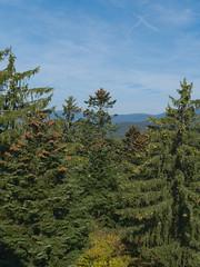 Bavarian-Forest-2018_11 (rhomboederrippel) Tags: rhomboederrippel fujifilm xe1 september 2018 europe germany bavaria nationalpark bayerischer wald neuschönau baumwipfelpfad treetopwalk fir spruce blue green sun sky clear