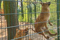 20.04.2019 12-34-2500 (TheFan1968) Tags: berlin christianekuhn tierpark friedrichsfelde tier asiatischerrothuind hund
