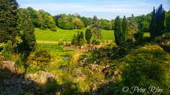 Avenham Park, Preston. (peterileypics) Tags: park green grass plants trees summer preston lancashire nature scenery landscape light lightroom sunshine sun