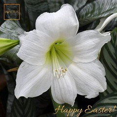 Happy Easter everyone! 🐇🐣🌸 (invictusgroupinc) Tags: invictus group inc cherry hill nj