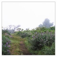 The Mist- Point Reyes , May 2018 (Sandra Jinyi Li) Tags: fog film fuji chrome hasselblad zeiss velvia rvp 50