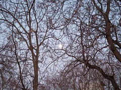 Πανσέληνος ανάμεσα σε κλαδιά... Dalların arasındaki Dolunay... The moon with trees... (sentatopoulos) Tags: πανσέληνοσ δέντρα βράδυ θέα αθήνα αθήναι ελλάδα ελλάσ ελληνικόσ αρχαία πόλη των αθηνών δήμοσ αθηναίων σεπόλια ομορφιά dolunay ağaç agaclar aksam manzara atina yunanistan yunan antik sehir merkez belediye sepolia guzellik great moon tree trees evening view athens greece hellas ancient city central athenes աթէնք