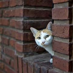 Me parece que vi un lindo gatito (harpman71) Tags: 35mm animal d5200 darktable gato nikon sanisidro cat