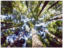 Move Forward (mortiemctavern) Tags: polaroid instant film roid week polaroidweek spring april 2019 day1 trees type100 polaroid180 peelapart