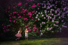 🌸 (ShanLuPhoto) Tags: rhododendron pacific pacificnorthwest washington state seattle girl kid pink siblinghood sunny