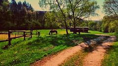 HORSE IYDLL (novaexpress93) Tags: novaexpress93 horses meadow landscape trees farm