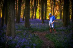 Blue Belle at dusk (paulinuk99999 (lback to photography at last!)) Tags: paulinuk99999 bluebells dusk sunset trees beech ilce7m3 sal135f18za