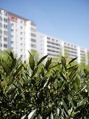 Am Prerower Platz. / 21.04.2019 (ben.kaden) Tags: berlin hohenschönhausen neuhohenschönhausen prerowerplatz stadtnatur plattenbau 2019 21042019