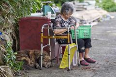 A7R3__DSC3460_C1 (Bazoka+Cynthia) Tags: dog shinjichen 小婆 新北市 牧耘菲 狗 貢寮區 馬崗漁港