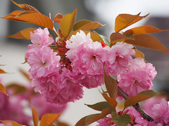 Blüten (RS_1978) Tags: pflanzen olympuspenf plantes plants konstanz badenwürttemberg deutschland