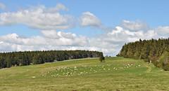 """Landschaftspflege (Uli He - Fotofee) Tags: ulrike """"ulrike he"""" uli """"uli hergert"""" hergert nikon """"nikon d90"""" fotofee fotografie hobbie wanderung rhön """"hessische rhön"""" """"bayrische """"thüringer hütte"""" orchideen orchidee """"rother kuppe"""" berg bergrestaurant grün frühling mai freunde basel besuch bäume steine hochebene """"lange hochrhöner extratour """"extratour lange lupinen trollblumen aussichtspunkt panoramatafeln basaltsee """"steinernes haus"""" fusweg feuchtgebiet"""
