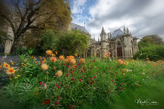 Notre-Dame rising above the flowers (marko.erman) Tags: france cathedral church monument architecture beautiful seine river sony popular pov gardens flower springtime southfacade wideangle workdheritagesite iledelacité paris
