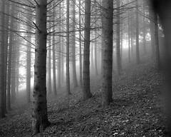 Salève (fabien hoyois) Tags: salève fog landscape france francelandscape forest foret mamiya mamiya7ii moyenformat mediumformat mediumformat6x7 6x7 moyenformat6x7 filmisnotdead filmphotography photonoiretblanc photographers photographieargentique argentique kodak kodakfilm