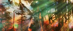 Celestial Plains Faerie (ColeMarie Soleil (Cole's Corner)) Tags: celestial plains secondlife sl syn beresford faerie fairy fantasy faire 2019 fairchylde