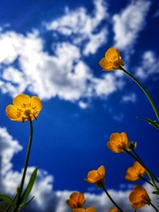 Catching rays (LAKAN346) Tags: sun fun spring 2019 outdoors flowers yellow green blue clouds sky