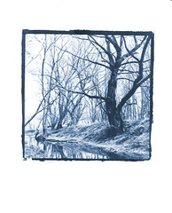 April 11 (Holden Richards) Tags: cyanotype strathmore300gsmpaper alternativeprinting filmnegatives contactprint 8x10camera holdenrichards northcarolina