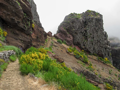 Foggy mountain hike (RIch-ART In PIXELS) Tags: madeira portugal landscape rock rockformation path picodoarieiro mountainridge mountain fog mist flower canon