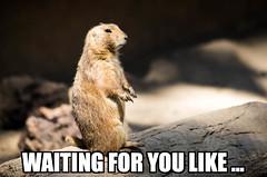 Waiting for you like ... (wuestenigel) Tags: meme memes nature natur wildlife tierwelt noperson keineperson outdoors drausen cute süs mammal säugetier wild alert warnen fur pelz animal tier little wenig sit sitzen rodent nagetier looking suchen ground boden barbaric barbarisch eye auge funny lustig park squirrel eichhörnchen2019 2020 2021 2022 2023 2024 2025 2026 2027 2028 2029 2030