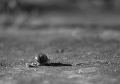 Way to darkness... (Capturedbyhunter) Tags: fernando caçador marques fajarda coruche ribatejo santarém portugal pentax k5 smc k 135mm f25 caracol snail manual focus focagem foco bokeh dof monocromático monochrome black white preto e branco pentaxart