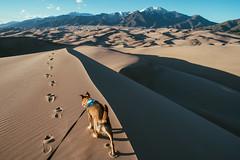 Stella, leading the way (M///S///H) Tags: 24mm lenstagger canonfd canonfd24mmf14 dog doggo greatsanddunes greatsanddunesnationalpark hike hiking leash nationalpark pup pupper rescuepuppy sonya7 stella walking