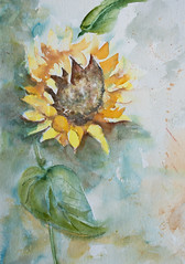 solros (halinalarsson) Tags: flower flowers painting watercolor halina