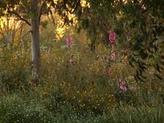 Цветы (unicorn7unicorn) Tags: закат парк цветы дерево colorfulnature
