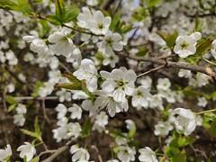 Parc des Raisses @ Annecy-le-Vieux (*_*) Tags: printemps spring 2019 europe france hautesavoie 74 annecy annecylevieux park