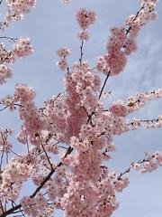 Annecy-le-Vieux (*_*) Tags: printemps spring 2019 europe france hautesavoie 74 annecy annecylevieux