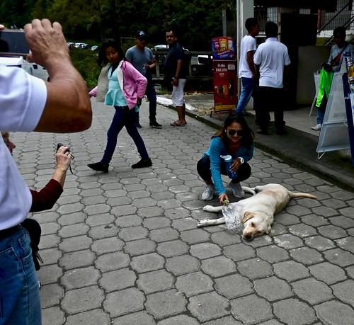 OMG! A Dog! I've never seen one before.