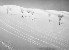 1960s スキー場 Ski Slope (ShowaDays) Tags: スキー場 雪山 ゲレンデ スロープ 雪 skiingground skislope skiresort snow showaperiod 昭和時代 日本 japan
