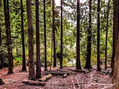 The woods (Thunderstormnightmare) Tags: washington lakestevens picturechallenge photochallenge challenge sunday april spring nice dirt unlimitedpictures unlimitedphotos brown green trees woods