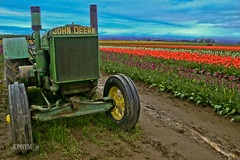 Oh Deere John! (J0nnyM) Tags: tulip tulips flowers flower bloom flowering blooming blooms nature oregon america northwest rows cultivation farm tractor green machinery machine tools hdr scenery