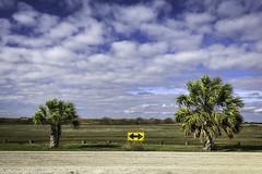 Left Turn Right Turn - Palacios (Mabry Campbell) Tags: palacios texas usa coast coastal image iphone landscape palmtrees photo photograph road roadsign roadscape trees f18 mabrycampbell january 2019 january212019 img9860 399mm ¹⁄₃₇₀₀sec 25 iphone8backcamera399mmf18