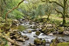 River Plym near Shaugh Prior, Dartmoor (Baz Richardson (now away for a few days)) Tags: devoin dartmoor riverplym rapids streams woods woodland