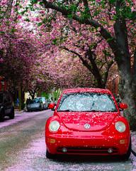 City in Bloom I (Dalliance with Light (Andy Farmer)) Tags: spring flowers cherryblossoms street 21stst city vwbeetle fairmount philadelphia philly pennsylvania unitedstatesofamerica
