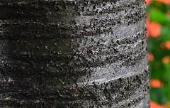 Cemetery Tree (DJ Fotographic) Tags: surrey centre cemetery cloverdale nikon nikkor 180mm f28 edif