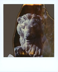 Hear Me Roar (tobysx70) Tags: polaroid sx70 timezero time zero tz expired instant film 0906 roidweek roid week polaroidweek spring april 2019 hear me roar beachwood drive canyon hollywood hills los angeles la california ca lion statue sculpture mane flames divot day2 toby hancock photography