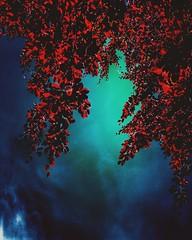 Hozitu eta eihartu. (Jaione Dagdrømmer) Tags: surreal surrealistic sunlight light nature landscape sky red tree